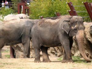 Voyages culturels - Zoo